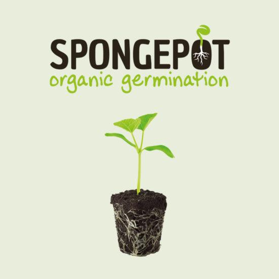 Spongepot logo ontwerp Costa Blanca